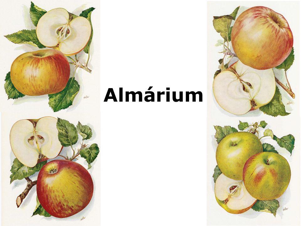 Nagyanyáink almáriumában sokféle portéka lapult a tányéroktól a könyvekig, a közös az volt bennük, hogy mindegyik a család múltjának része volt, ugyanakkor napról napra kézbe vették és használták őket.