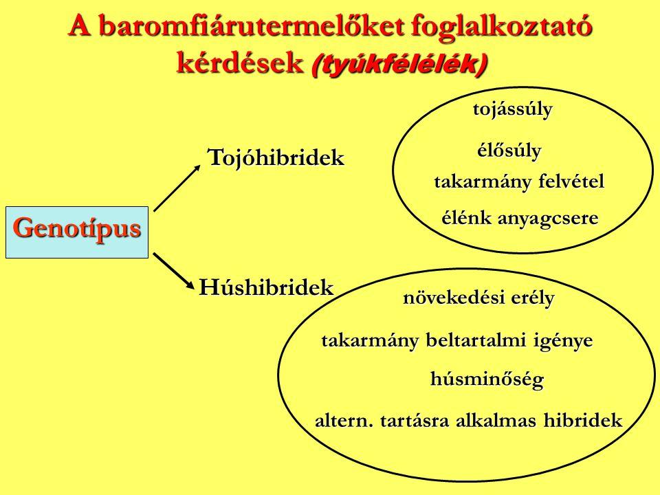 A baromfiárutermelőket foglalkoztató kérdések (tyúkfélélék) Genotípus Tojóhibridek Húshibridek élősúly tojássúly takarmány felvétel élénk anyagcsere n