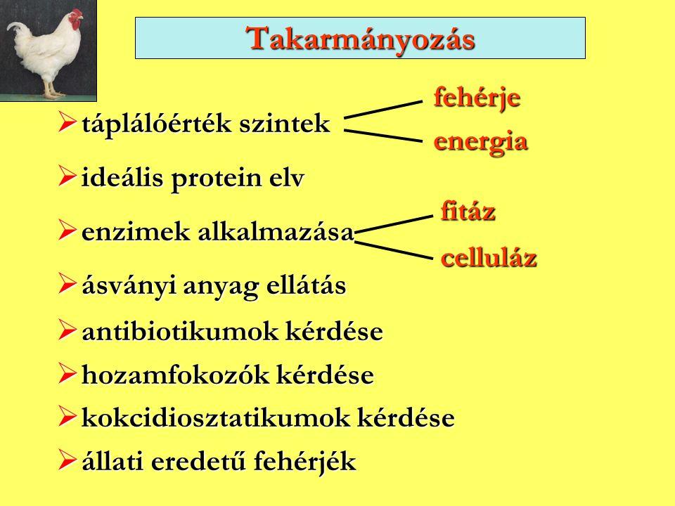  táplálóérték szintek  ideális protein elv  enzimek alkalmazása  ásványi anyag ellátás  antibiotikumok kérdése  hozamfokozók kérdése  kokcidios