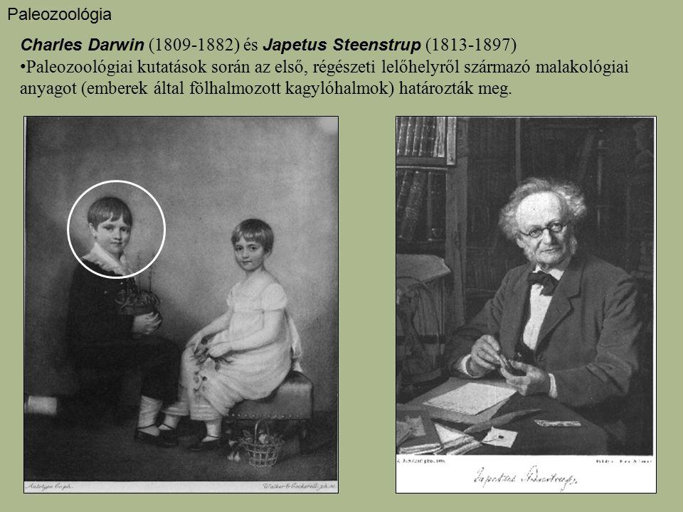 Paleozoológia Charles Darwin (1809-1882) és Japetus Steenstrup (1813-1897) Paleozoológiai kutatások során az első, régészeti lelőhelyről származó mala
