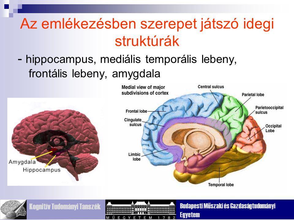 Kognitív Tudományi Tanszék Budapesti Műszaki és Gazdaságtudományi Egyetem Az emlékezésben szerepet játszó idegi struktúrák - hippocampus, mediális temporális lebeny, frontális lebeny, amygdala