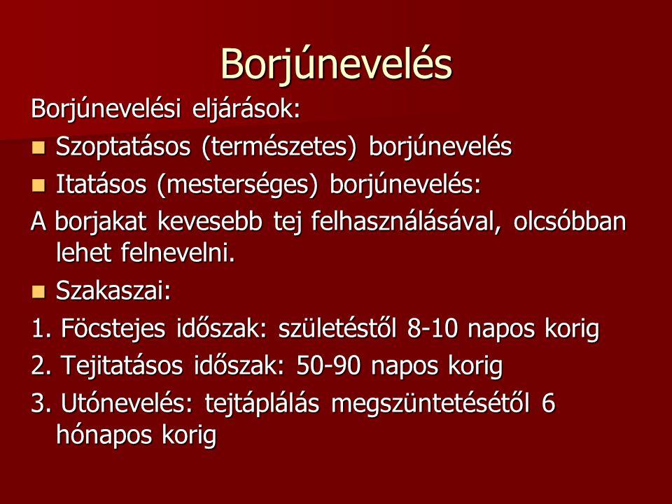Borjúnevelés Borjúnevelési eljárások: Szoptatásos (természetes) borjúnevelés Szoptatásos (természetes) borjúnevelés Itatásos (mesterséges) borjúnevelé