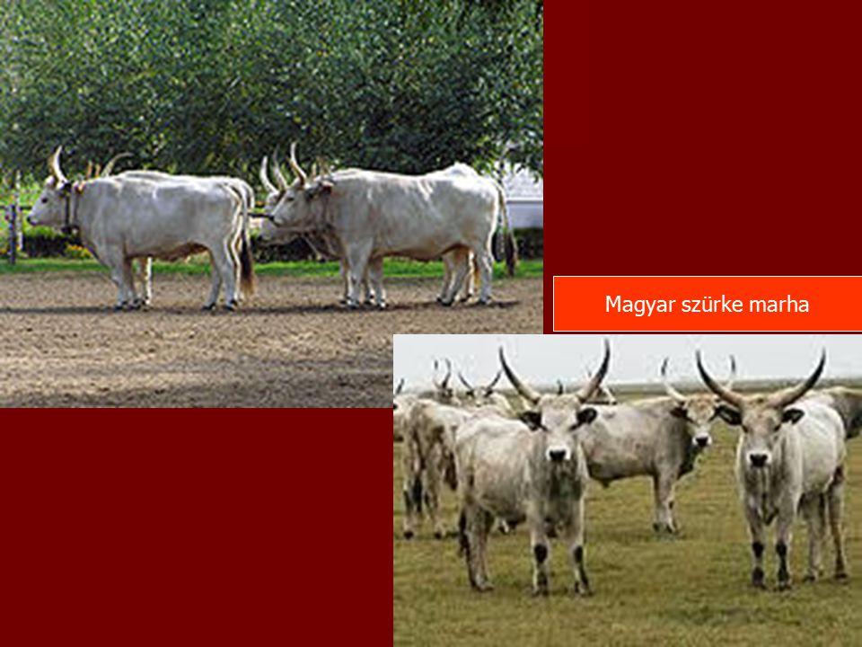 A szárazonállók táplálóanyag igénye és takarmányfelvétele egyaránt alacsony.
