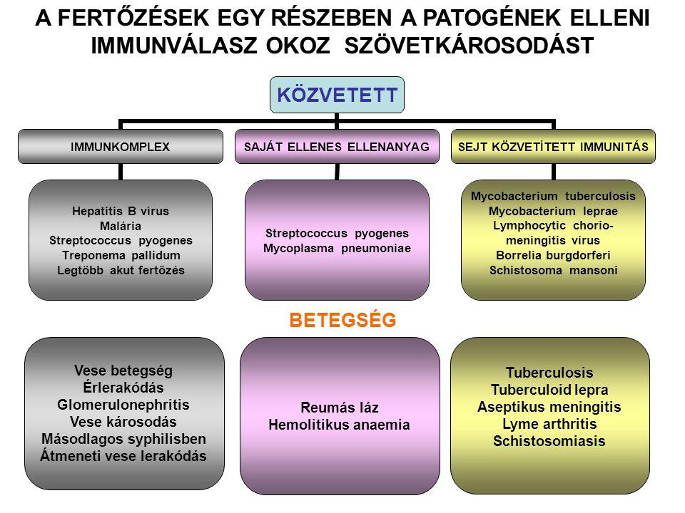 KÖZVETETT IMMUNKOMPLEX Hepatitis B vírus Malária Streptococcus pyogenes Treponema pallidum Legtöbb akut fertőzés SAJÁT ELLENES ELLENANYAG Streptococcus pyogenes Mycoplasma pneumoniae SEJT KÖZVETÍTETT IMMUNITÁS Mycobacterium tuberculosis Mycobacterium leprae Lymphocytic chorio- meningitis virus Borrelia burgdorferi Schistosoma mansoni Vese betegség Érlerakódás Glomerulonephritis Vese károsodás Másodlagos syphilisben Átmeneti vese lerakódás Reumás láz Hemolitikus anaemia Tuberculosis Tuberculoid lepra Aseptikus meningitis Lyme arthritis Schistosomiasis BETEGSÉG A FERTŐZÉSEK EGY RÉSZEBEN A PATOGÉNEK ELLENI IMMUNVÁLASZ OKOZ SZÖVETKÁROSODÁST