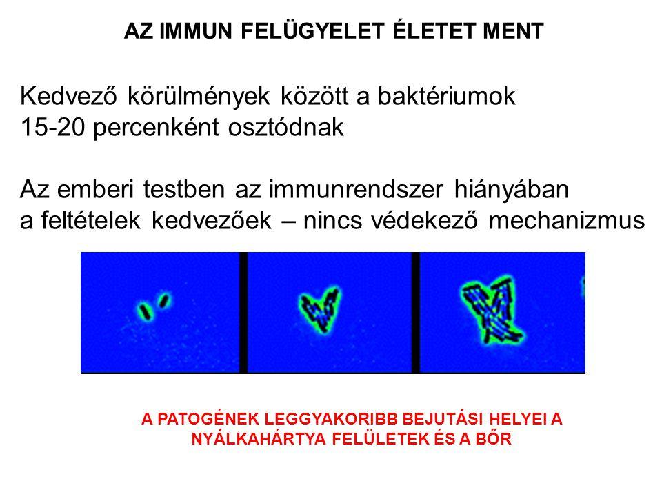 Kedvező körülmények között a baktériumok 15-20 percenként osztódnak Az emberi testben az immunrendszer hiányában a feltételek kedvezőek – nincs védekező mechanizmus A PATOGÉNEK LEGGYAKORIBB BEJUTÁSI HELYEI A NYÁLKAHÁRTYA FELÜLETEK ÉS A BŐR AZ IMMUN FELÜGYELET ÉLETET MENT