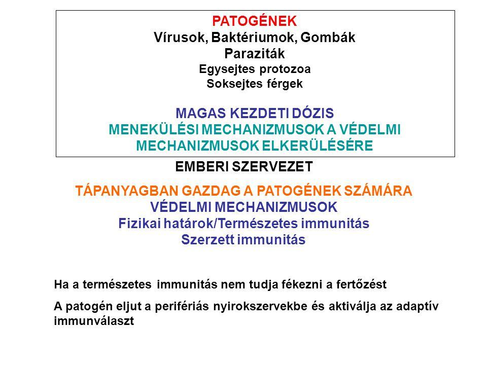 PATOGÉNEK Vírusok, Baktériumok, Gombák Paraziták Egysejtes protozoa Soksejtes férgek MAGAS KEZDETI DÓZIS MENEKÜLÉSI MECHANIZMUSOK A VÉDELMI MECHANIZMUSOK ELKERÜLÉSÉRE EMBERI SZERVEZET TÁPANYAGBAN GAZDAG A PATOGÉNEK SZÁMÁRA VÉDELMI MECHANIZMUSOK Fizikai határok/Természetes immunitás Szerzett immunitás Ha a természetes immunitás nem tudja fékezni a fertőzést A patogén eljut a perifériás nyirokszervekbe és aktiválja az adaptív immunválaszt