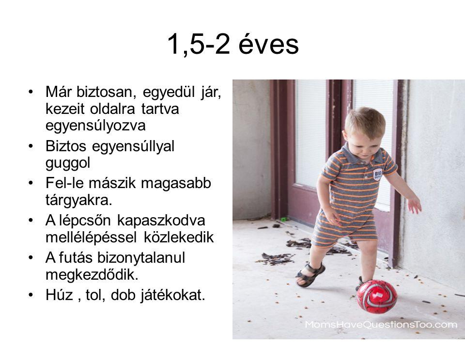 1,5-2 éves Már biztosan, egyedül jár, kezeit oldalra tartva egyensúlyozva Biztos egyensúllyal guggol Fel-le mászik magasabb tárgyakra. A lépcsőn kapas