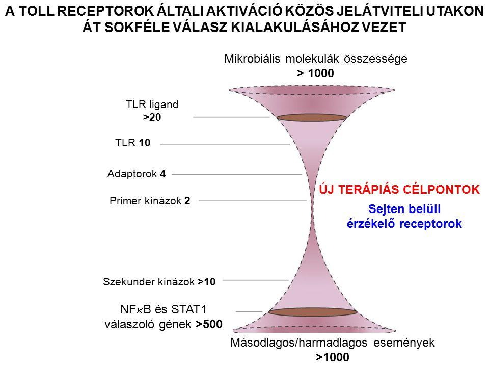 A TOLL RECEPTOROK ÁLTALI AKTIVÁCIÓ KÖZÖS JELÁTVITELI UTAKON ÁT SOKFÉLE VÁLASZ KIALAKULÁSÁHOZ VEZET Mikrobiális molekulák összessége > 1000 TLR ligand >20 TLR 10 Adaptorok 4 Primer kinázok 2 Szekunder kinázok >10 NF  B és STAT1 válaszoló gének >500 Másodlagos/harmadlagos események >1000 ÚJ TERÁPIÁS CÉLPONTOK Sejten belüli érzékelő receptorok