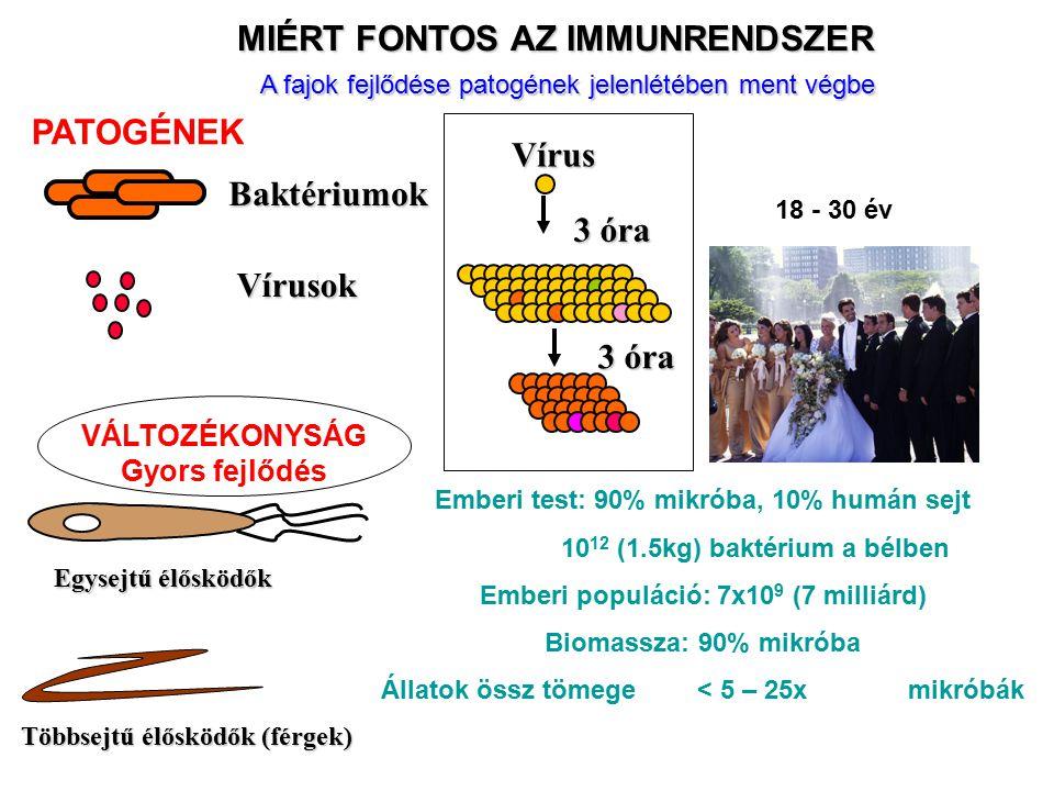 MIÉRT FONTOS AZ IMMUNRENDSZER Baktériumok Vírusok Többsejtű élősködők (férgek) Egysejtű élősködők 18 - 30 év Vírus 3 óra VÁLTOZÉKONYSÁG Gyors fejlődés PATOGÉNEK A fajok fejlődése patogének jelenlétében ment végbe Emberi test: 90% mikróba, 10% humán sejt 10 12 (1.5kg) baktérium a bélben Emberi populáció: 7x10 9 (7 milliárd) Biomassza: 90% mikróba Állatok össz tömege< 5 – 25x mikróbák