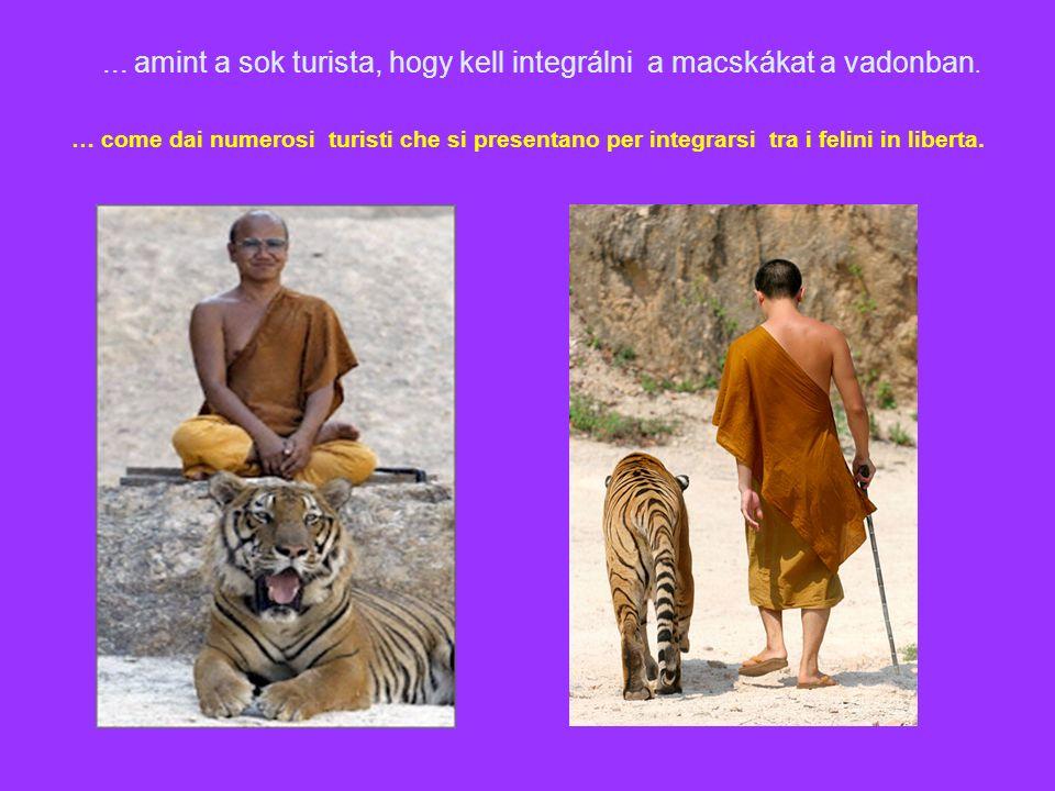 … come dai numerosi turisti che si presentano per integrarsi tra i felini in liberta....