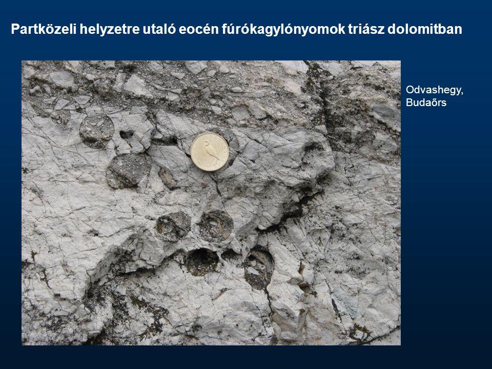 Partközeli helyzetre utaló eocén fúrókagylónyomok triász dolomitban Odvashegy, Budaőrs
