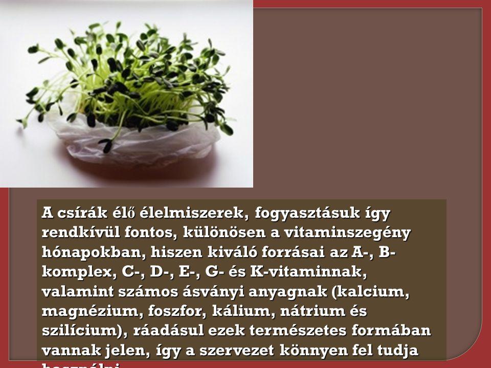 A csírák él ő élelmiszerek, fogyasztásuk így rendkívül fontos, különösen a vitaminszegény hónapokban, hiszen kiváló forrásai az A-, B- komplex, C-, D-