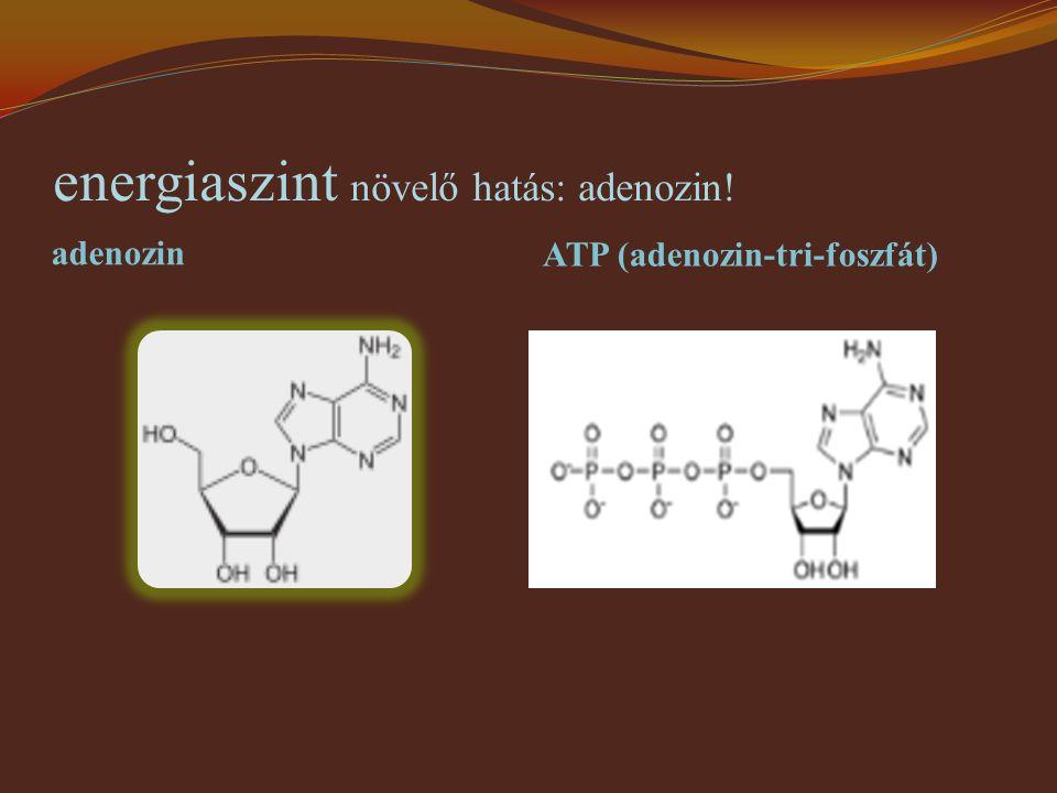 energiaszint növelő hatás: adenozin! adenozin ATP (adenozin-tri-foszfát)