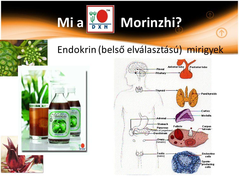 Mi a Morinzhi? Endokrin (belső elválasztású) mirigyek