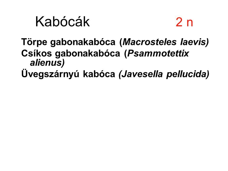 Kabócák 2 n Törpe gabonakabóca (Macrosteles laevis) Csíkos gabonakabóca (Psammotettix alienus) Üvegszárnyú kabóca (Javesella pellucida)