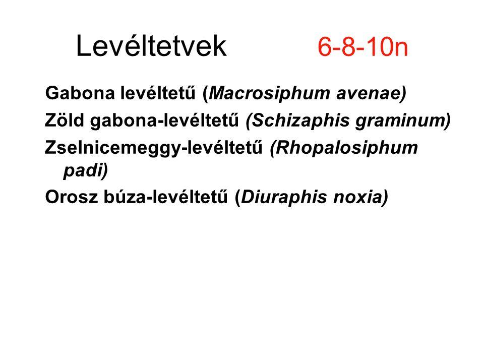 Levéltetvek 6-8-10n Gabona levéltetű (Macrosiphum avenae) Zöld gabona-levéltetű (Schizaphis graminum) Zselnicemeggy-levéltetű (Rhopalosiphum padi) Orosz búza-levéltetű (Diuraphis noxia)
