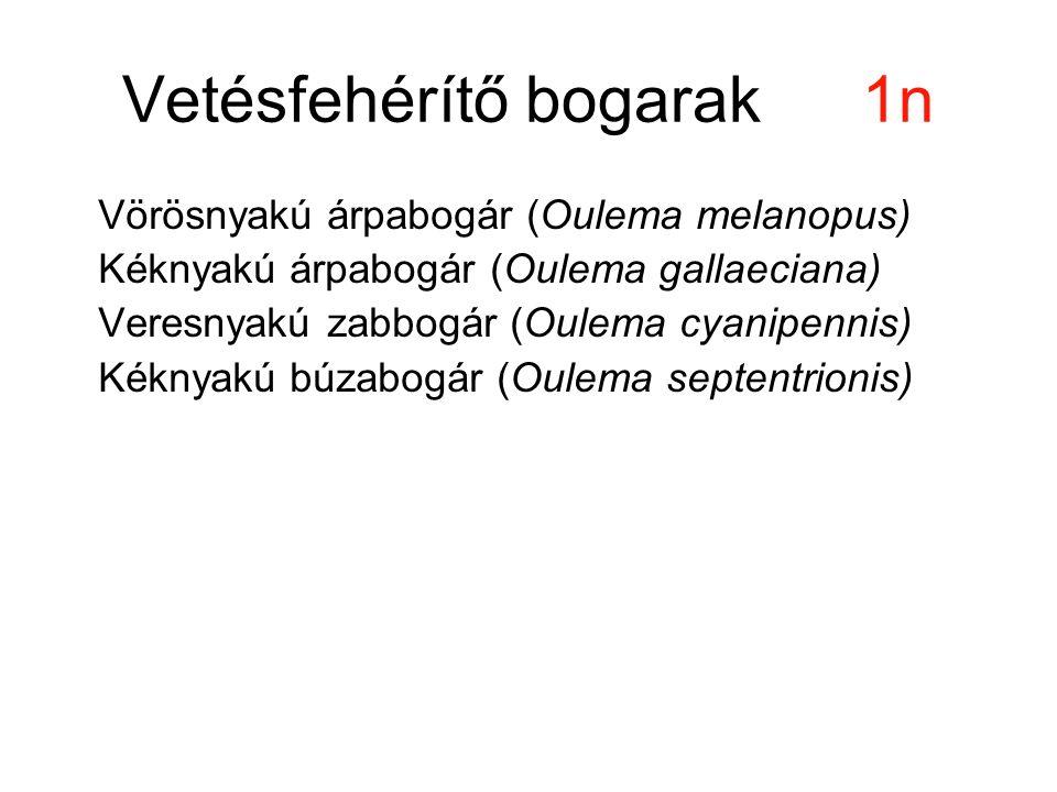 Vetésfehérítő bogarak1n Vörösnyakú árpabogár (Oulema melanopus) Kéknyakú árpabogár (Oulema gallaeciana) Veresnyakú zabbogár (Oulema cyanipennis) Kékny