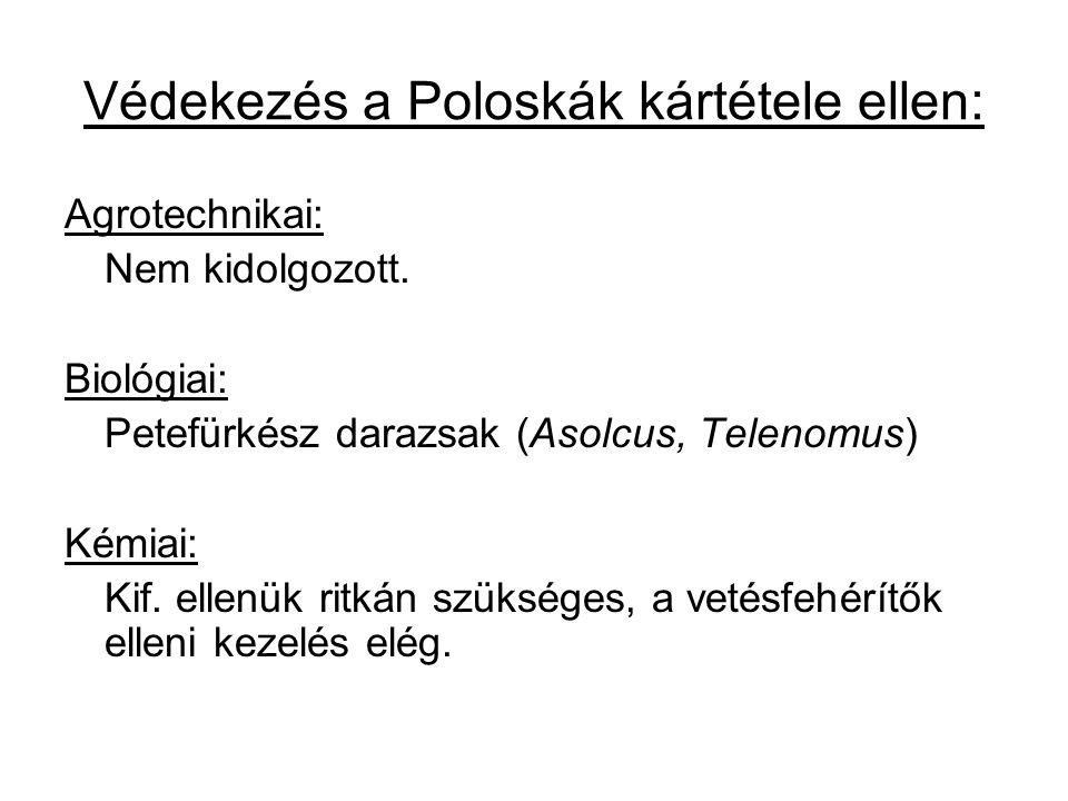 Védekezés a Poloskák kártétele ellen: Agrotechnikai: Nem kidolgozott. Biológiai: Petefürkész darazsak (Asolcus, Telenomus) Kémiai: Kif. ellenük ritkán