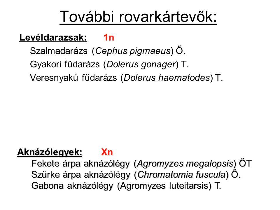 További rovarkártevők: Levéldarazsak:1n Szalmadarázs (Cephus pigmaeus) Ő. Gyakori fűdarázs (Dolerus gonager) T. Veresnyakú fűdarázs (Dolerus haematode