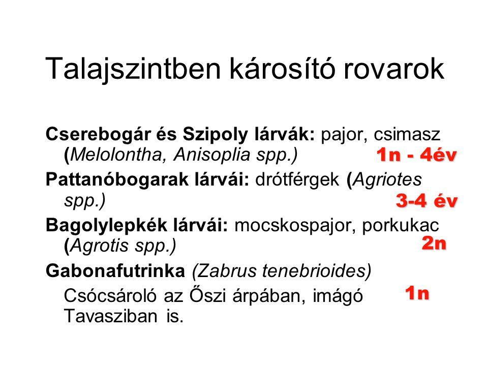 Talajszintben károsító rovarok Cserebogár és Szipoly lárvák: pajor, csimasz (Melolontha, Anisoplia spp.) Pattanóbogarak lárvái: drótférgek (Agriotes spp.) Bagolylepkék lárvái: mocskospajor, porkukac (Agrotis spp.) Gabonafutrinka (Zabrus tenebrioides) Csócsároló az Őszi árpában, imágó Tavasziban is.