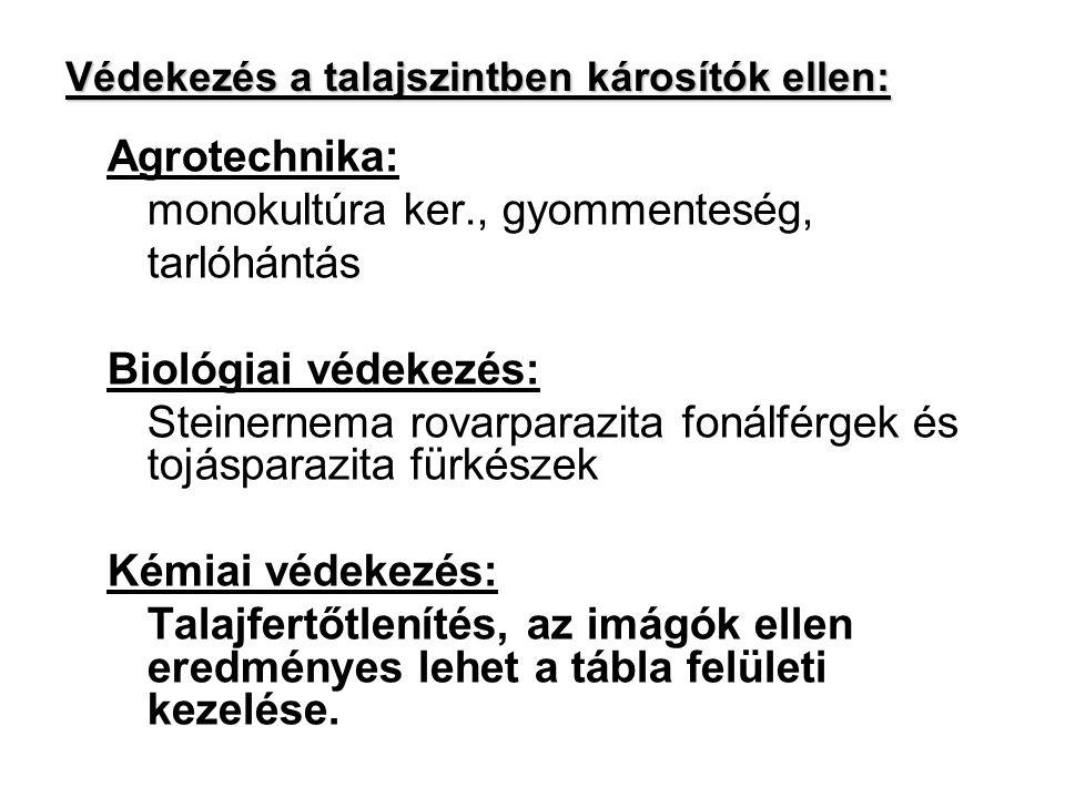 Gabonapoloskák1n Osztrák poloska (Eurygaster austriaca) Mórpoloska (Eurygaster maura) Közönséges szipolyposolka (Aelia acuminata)