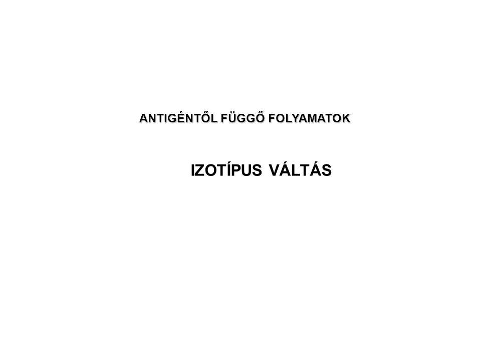 IZOTÍPUS VÁLTÁS ANTIGÉNTŐL FÜGGŐ FOLYAMATOK