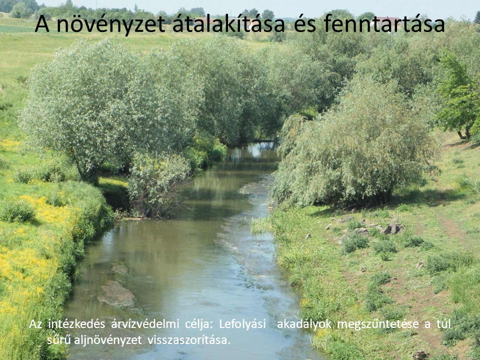 A növényzet átalakítása és fenntartása Az intézkedés árvízvédelmi célja: Lefolyási akadályok megszűntetése a túl sűrű aljnövényzet visszaszorítása.