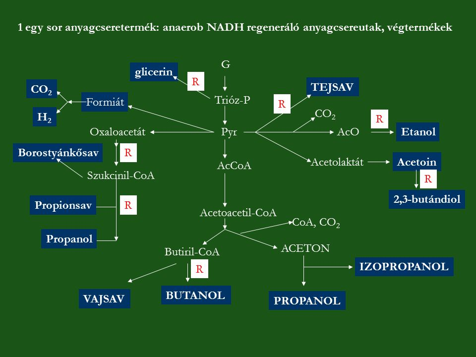 G Trióz-P Pyr AcCoA Acetoacetil-CoA Butiril-CoA BUTANOL VAJSAV ACETON PROPANOL IZOPROPANOL TEJSAV AcOEtanol CO 2 AcetolaktátAcetoin 2,3-butándiol glic