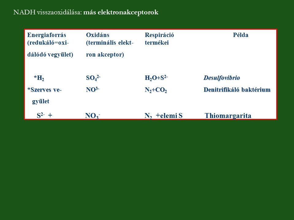 EnergiaforrásOxidánsRespirációPélda (redukáló=oxi-(terminális elekt-termékei dálódó vegyület)ron akceptor) *H 2 SO 4 2- H 2 O+S 2- Desulfovibrio *Szer