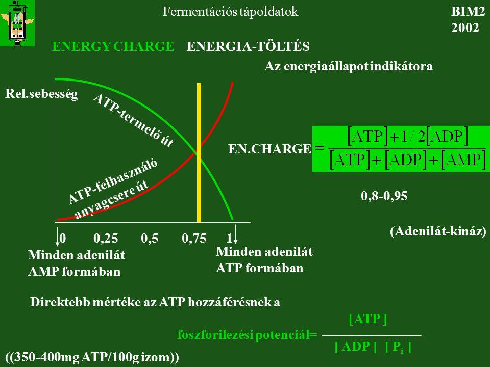 BIM2 2002 Fermentációs tápoldatok ENERGY CHARGE ENERGIA-TÖLTÉS ATP-termelő út ATP-felhasználó anyagcsere út Rel.sebesség EN.CHARGE Az energiaállapot i