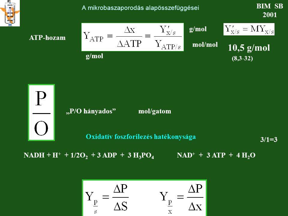 """A mikrobaszaporodás alapösszefüggései BIM SB 2001 ATP-hozam g/mol mol/mol 10,5 g/mol (8,3-32) Oxidatív foszforilezés hatékonysága """"P/O hányados""""mol/ga"""