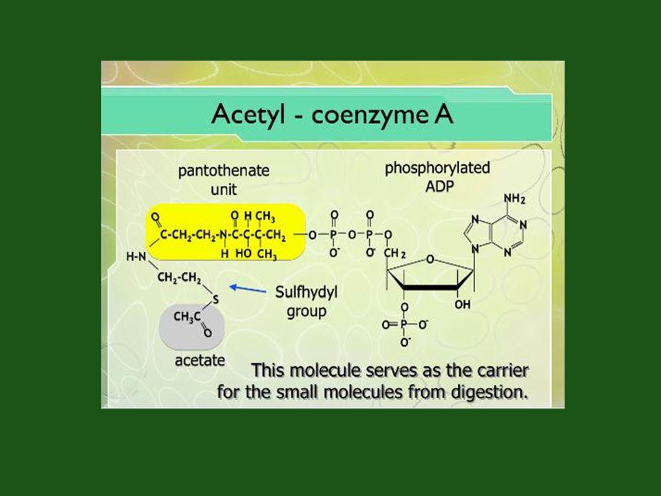 glükóz ( 6 C-atom) G-6-P F-6-P F-1,6-diP Gliceraldehid-P (3C-atom) PEP Pyr Ac-CoA citrátOxálacetát Cis-akonitát i-citrát  keto-glutarát Szukcinát Fumarát Malát ADP ATP ADP ATP ADP ATP ADP 2-P-glicerát 3-P-glicerát 1,3-diP-glicerát 2H 2H 2H 2H 2H 2H NAD CO 2 koenzimQ 2*3 CO 2 + 5*2H = C 6 H 12 O 6 CUKOR KATABOLIZMUS Glikolízis (Embden, Meyerhof Parnas ) –legtöbb baktérium –Állati és növényi sejtek Citrátkör(Szentgyörgyi-Krebs)