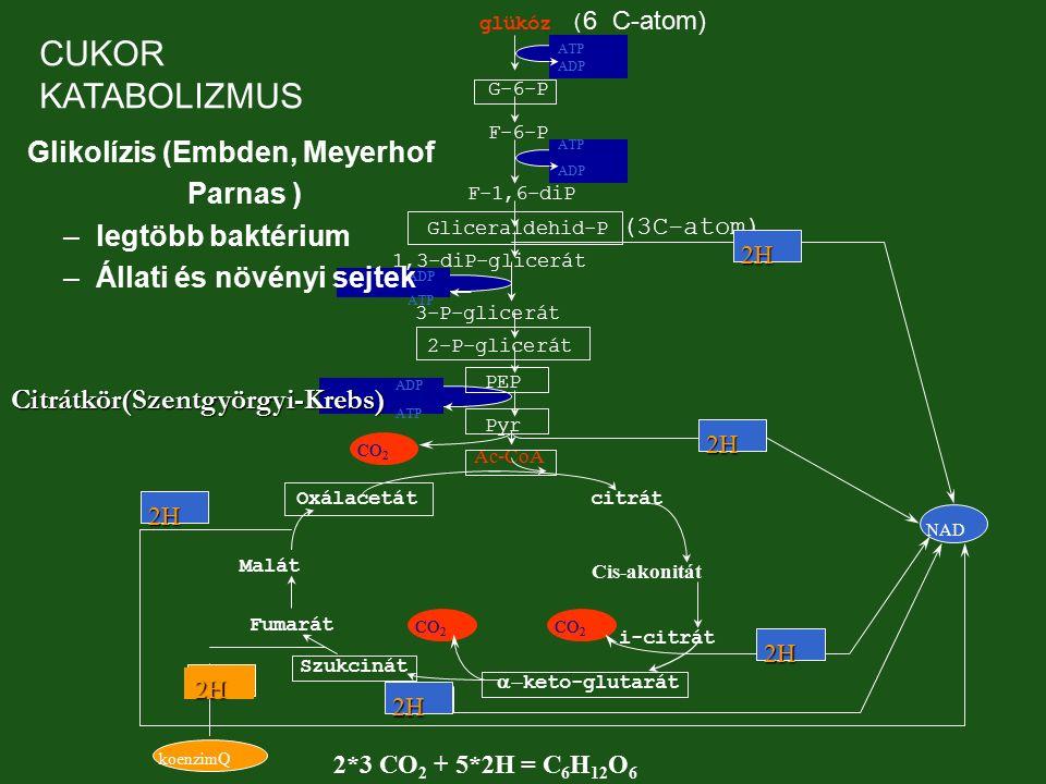 MONOD modell-család BIM2 2002 Növekedéshez kötött Növekedéshez nem kötött Vegyes típus x x x P P P μxμx μxμx μxμx μPμP μPμP μPμP GAEDEN-féle termékképződési típusok Primer acs.