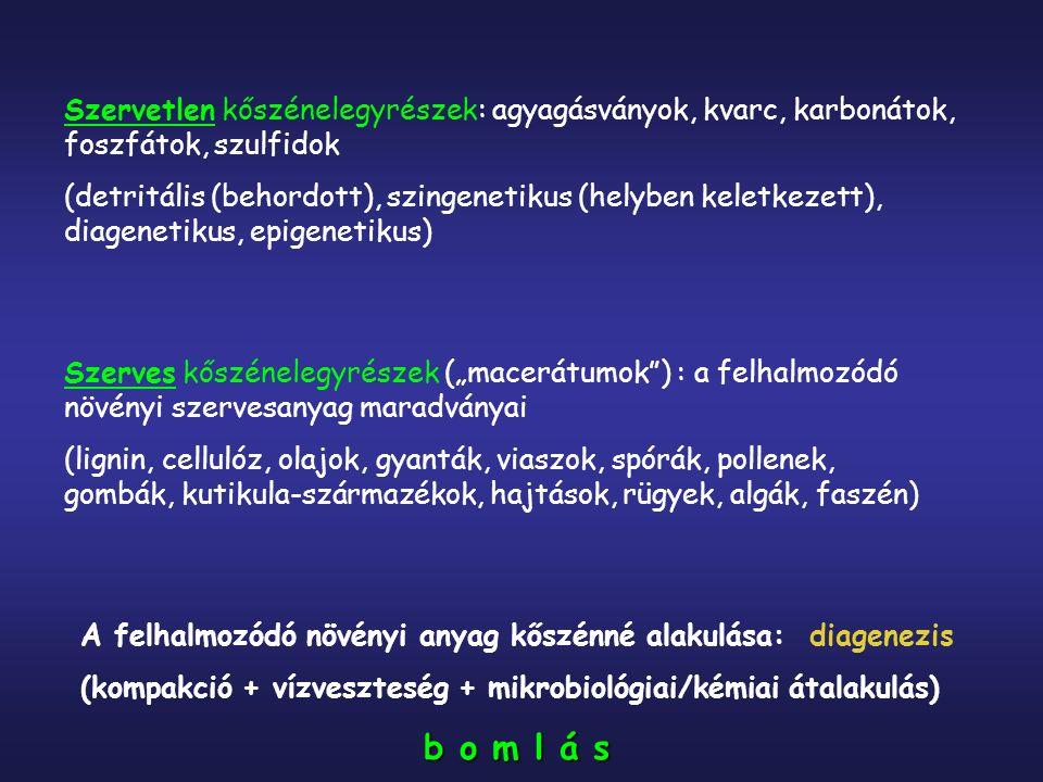 """Szervetlen kőszénelegyrészek: agyagásványok, kvarc, karbonátok, foszfátok, szulfidok (detritális (behordott), szingenetikus (helyben keletkezett), diagenetikus, epigenetikus) Szerves kőszénelegyrészek (""""macerátumok ) : a felhalmozódó növényi szervesanyag maradványai (lignin, cellulóz, olajok, gyanták, viaszok, spórák, pollenek, gombák, kutikula-származékok, hajtások, rügyek, algák, faszén) A felhalmozódó növényi anyag kőszénné alakulása: diagenezis (kompakció + vízveszteség + mikrobiológiai/kémiai átalakulás) b o m l á s"""