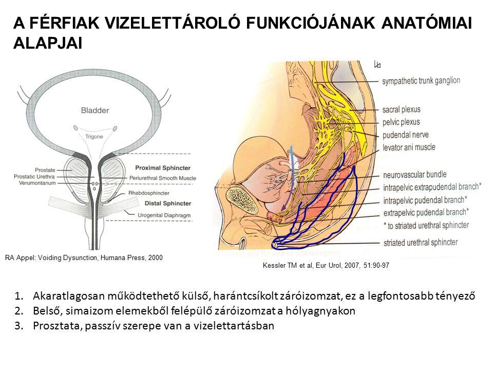 HYPERAKTÍV HÓLYAG PREVALENCIÁJA: ~ 16 % Ffi-nő 13,6 % vs 7,6% (kontinens) 2,4% vs 9,3% (inkontinens)
