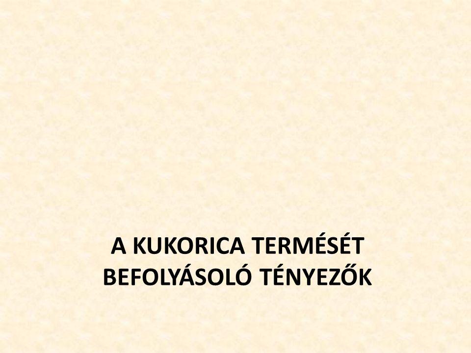 A KUKORICA TERMÉSÉT BEFOLYÁSOLÓ TÉNYEZŐK