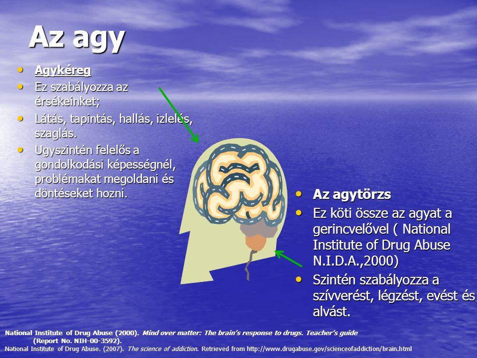 Az agy Agykéreg Agykéreg Ez szabályozza az érsékeinket; Ez szabályozza az érsékeinket; Látás, tapintás, hallás, izlelés, szaglás. Látás, tapintás, hal