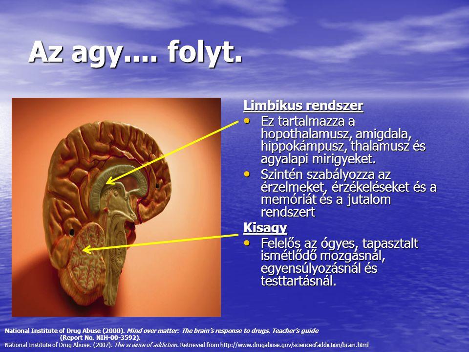Az agy.... folyt. Limbikus rendszer Ez tartalmazza a hopothalamusz, amigdala, hippokámpusz, thalamusz és agyalapi mirigyeket. Ez tartalmazza a hopotha