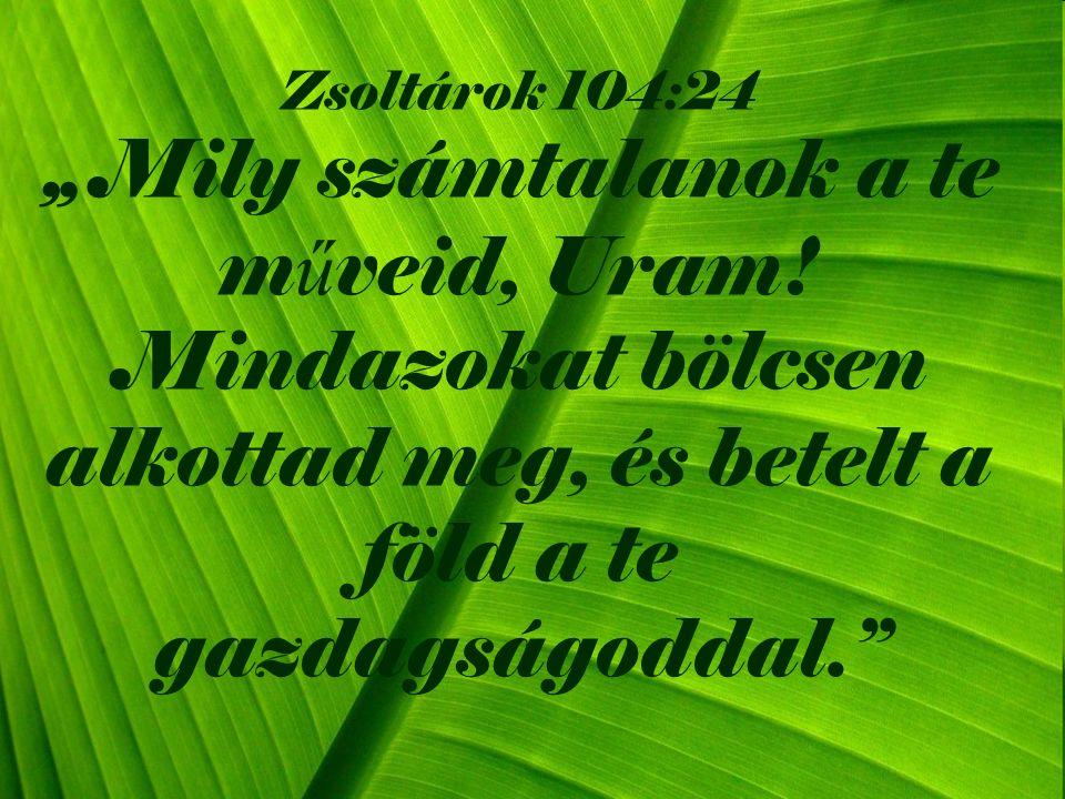 """Zsoltárok 104:24 """" Mily számtalanok a te m ű veid, Uram."""