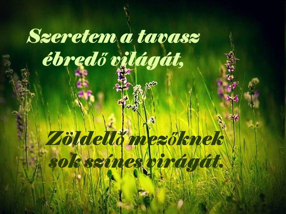 Szeretem a tavasz ébred ő világát, Zöldell ő mez ő knek sok színes virágát.