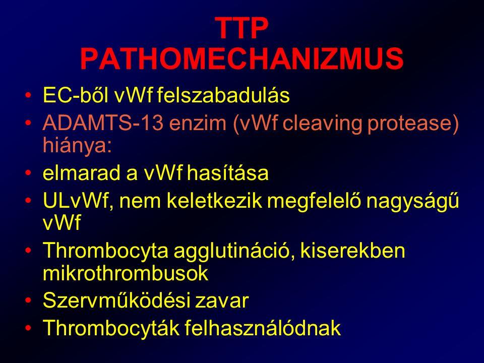TTP PATHOMECHANIZMUS EC-ből vWf felszabadulás ADAMTS-13 enzim (vWf cleaving protease) hiánya: elmarad a vWf hasítása ULvWf, nem keletkezik megfelelő n