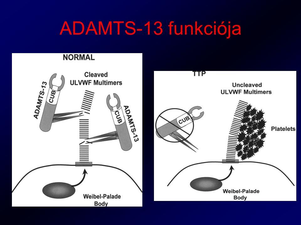ADAMTS-13 funkciója