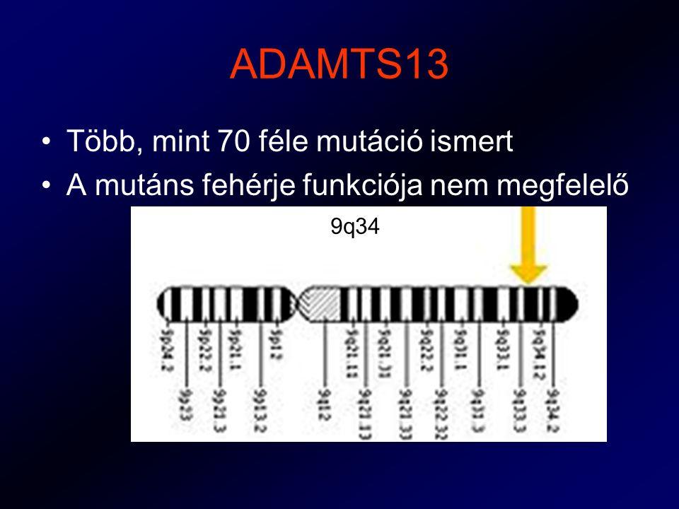 ADAMTS13 Több, mint 70 féle mutáció ismert A mutáns fehérje funkciója nem megfelelő 9q34