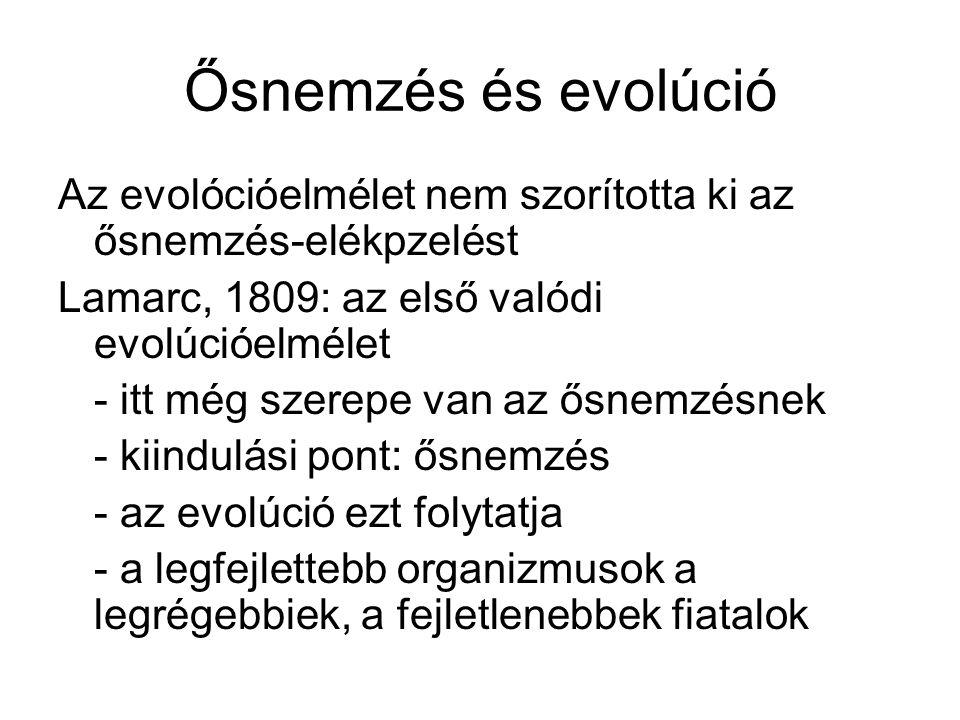 Ősnemzés és evolúció Az evolócióelmélet nem szorította ki az ősnemzés-elékpzelést Lamarc, 1809: az első valódi evolúcióelmélet - itt még szerepe van az ősnemzésnek - kiindulási pont: ősnemzés - az evolúció ezt folytatja - a legfejlettebb organizmusok a legrégebbiek, a fejletlenebbek fiatalok