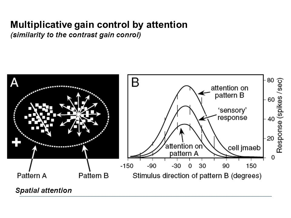 Multiplicative gain control by attention (similarity to the contrast gain conrol) Spatial attention
