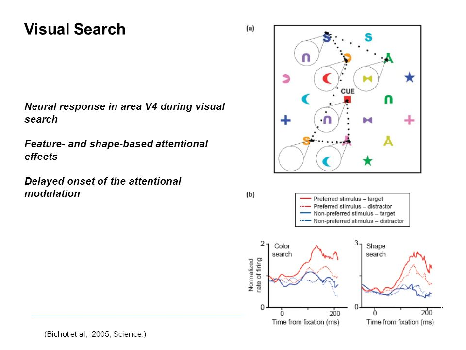 (Bichot et al, 2005, Science.) Visual Search Neural response in area V4 during visual search Feature- and shape-based attentional effects Delayed onse