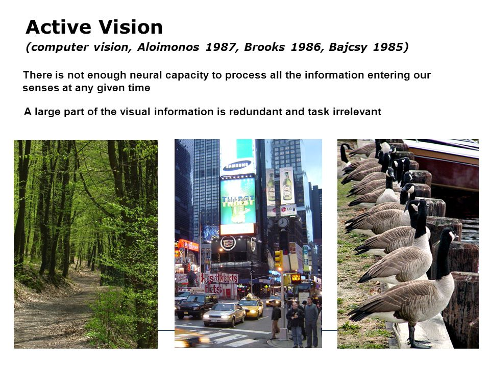 Vision is not a process whereby the brain transforms the retinal image into a unified picture-like internal representation of the three-dimensional scene Active Vision Vision is a mode of exploration of the world its main functions: acquire information about the visual environment visually guide our actions.