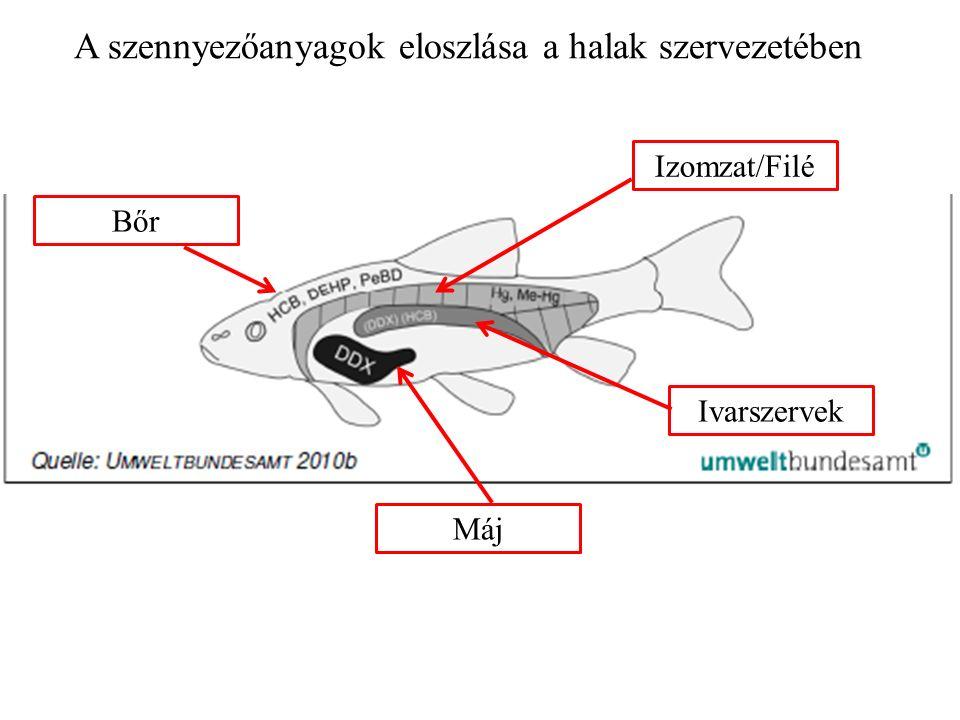 Izomzat/Filé Máj Ivarszervek Bőr A szennyezőanyagok eloszlása a halak szervezetében