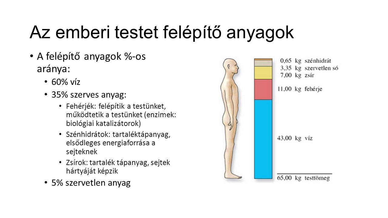 Az ember nemi kétalakúsága Az emberi test kétoldalian részarányos A férfi és a női test eltérései: a másodlagos nemi jellegek.