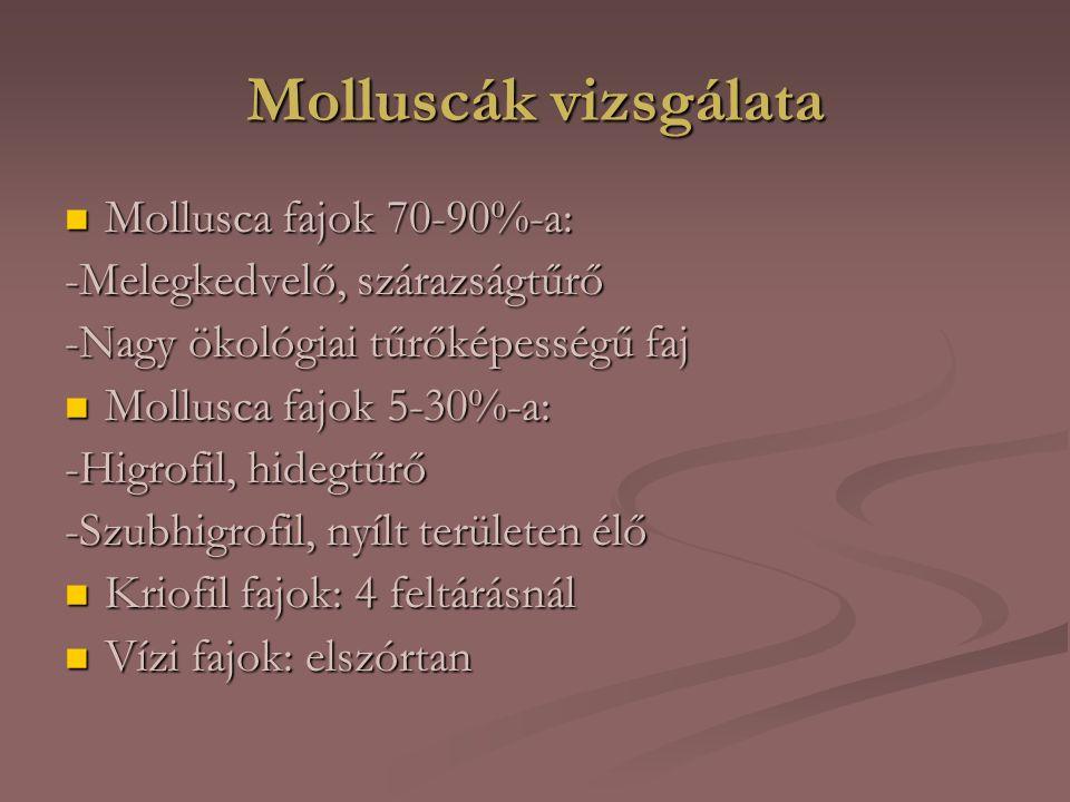 Molluscák vizsgálata Mollusca fajok 70-90%-a: Mollusca fajok 70-90%-a: -Melegkedvelő, szárazságtűrő -Nagy ökológiai tűrőképességű faj Mollusca fajok 5-30%-a: Mollusca fajok 5-30%-a: -Higrofil, hidegtűrő -Szubhigrofil, nyílt területen élő Kriofil fajok: 4 feltárásnál Kriofil fajok: 4 feltárásnál Vízi fajok: elszórtan Vízi fajok: elszórtan